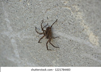 3/4 shot on wolf spider on wall outdoor.