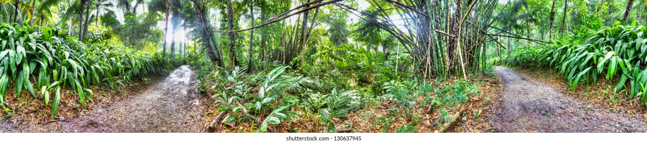 360 degree panorama of Jamaican forest