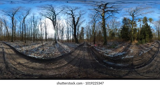 360 degree spherical panorama of european forest in winter with blue sky