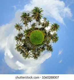 360 degree view of Green palm tree on blue sky background