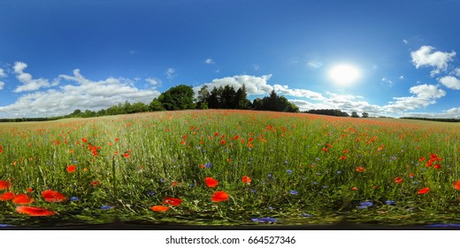 360 degrees spherical panorama of a green meadow with red poppies under sunnie blue sky