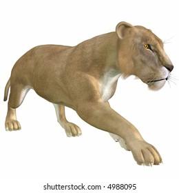 3D African Lion
