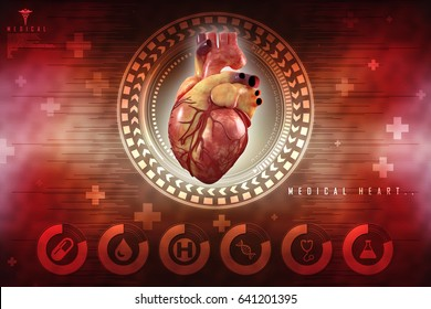 3d Anatomy of Human Heart