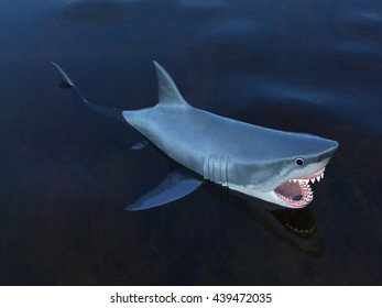 3D CG rendering of a shark