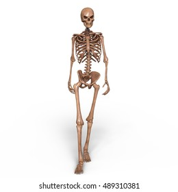 3D CG rendering of a skeleton