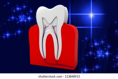 3D cross section of teeth