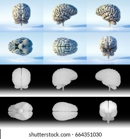 3D detailed renders of the human brain. Isolated with alpha/depth maps for easy editing.