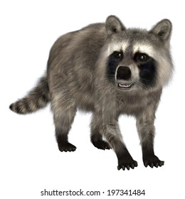3D digital render of an amazing animal raccoon isolated on white background