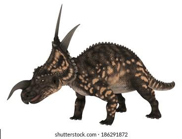3D digital render of a ceratopsian dinosaur Einiosaurus isolated on white background