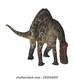 3D digital render of  a curious dinosaur Dicraeosaurus looking down isolated on white background