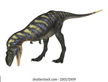 3D digital render of a curious dinosaur Aucasaurus looking down isolated on white background
