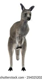 3D digital render of an Eastern grey kangaroo or Macropus giganteus or great grey kangaroo isolated on white background