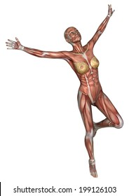 3D digital render of an exercising female anatomy figure with muscles map isolated on white background