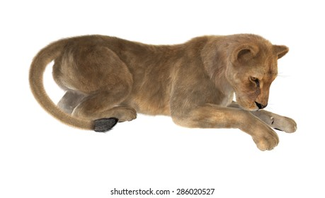 3D digital render of a female lion isolated on white background