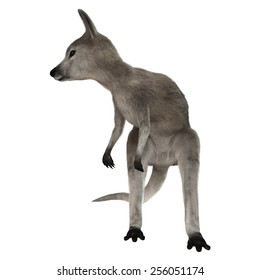 3D digital render of a grey baby kangaroo isolated on white background