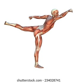 3D digital render of a human figure with muscle maps in a yoke punch martial arts position isolated on white background