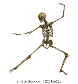3D digital render of a human skeleton in a bow and arrow martial arts position isolated on white background