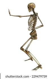 3D digital render of a human skeleton in a shuto-uke martial arts position isolated on white background