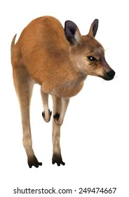 3D digital render of a jumping red kangaroo isolated on white background