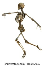 3D digital render of an old human skeleton isolated on white background