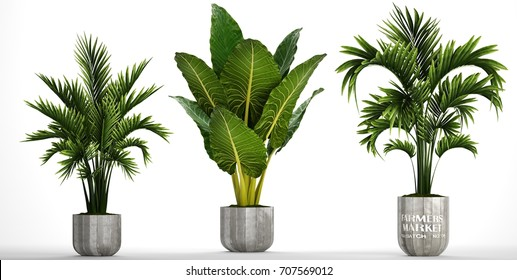 3D digital render of plant isolated on white background