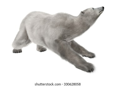 3D digital render of a polar bear isolated on white background
