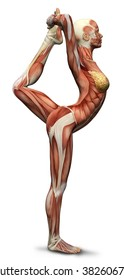 3D female medical figure in yoga pose