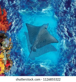 3d floor. High quality image with a stingray. Underwater world. View from above