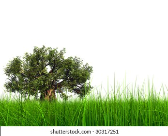 3d green grass isolated on white background with a natural green but old baobab tree. Ideal for nature,green or sport designs.