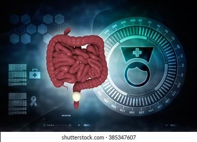 3d human digestive system