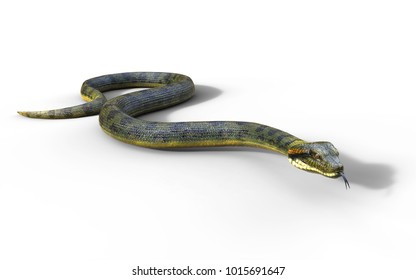 3d Illustration Anaconda, Boa Constrictor The World's Biggest Venomous Snake Isolated on White Background, 3d Rendering