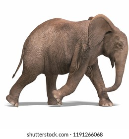 3D illustration of a baby elephant over white