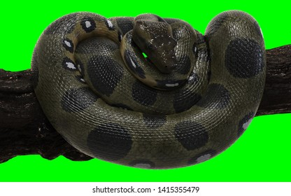 3d Illustration Boa Constrictor The World's Biggest Snake Isolated on Green Background with Clipping Path. Green Anaconda.