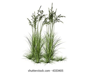 3D Illustration of a bush of grass