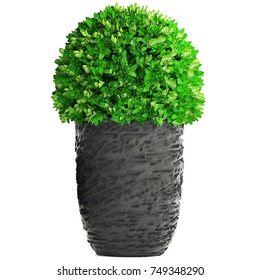 3d illustration bush in a pot on a white background