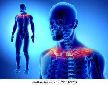 Clavicle images stock photos vectors shutterstock 3d illustration of clavicle part of human skeleton ccuart Gallery