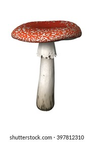 3D Illustration of a fly agaric or fly amanita or Amanita muscaria  isolated on white background
