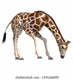 3D illustration of a giraffe over white