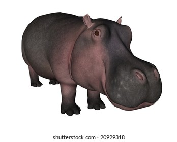 3D Illustration of a hippopotamus