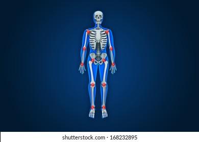3D illustration of human anatomy.