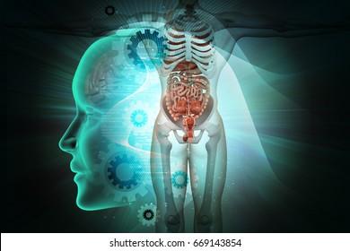3d illustration of Human anatomy
