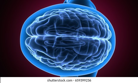 3d illustration of a human body brain