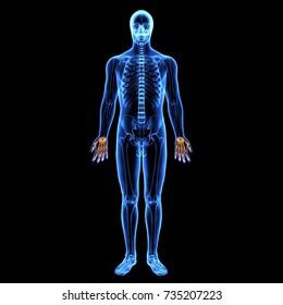 3d illustration of human body hand finer bone
