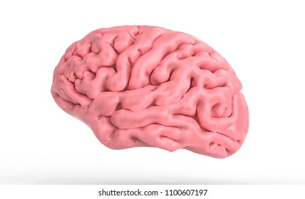 3d illustration of the human brain isolated in white 3d illustration