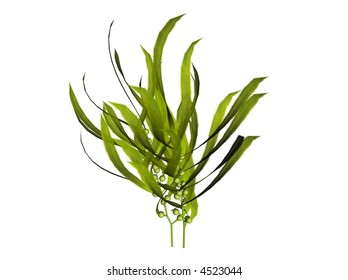 3D illustration of a kelp