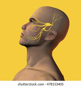 3D illustration of male face with trigeminal nerve