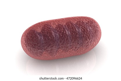 3D illustration of Mitochondria on white background