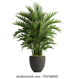 3d illustration of palm trees in a pot on a white background