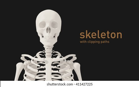 3d illustration of a skeleton. with clipping paths