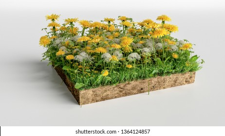 3D Illustration soil ground cross section with earth land and green grass, realistic 3D rendering cutaway terrain floor with flowers